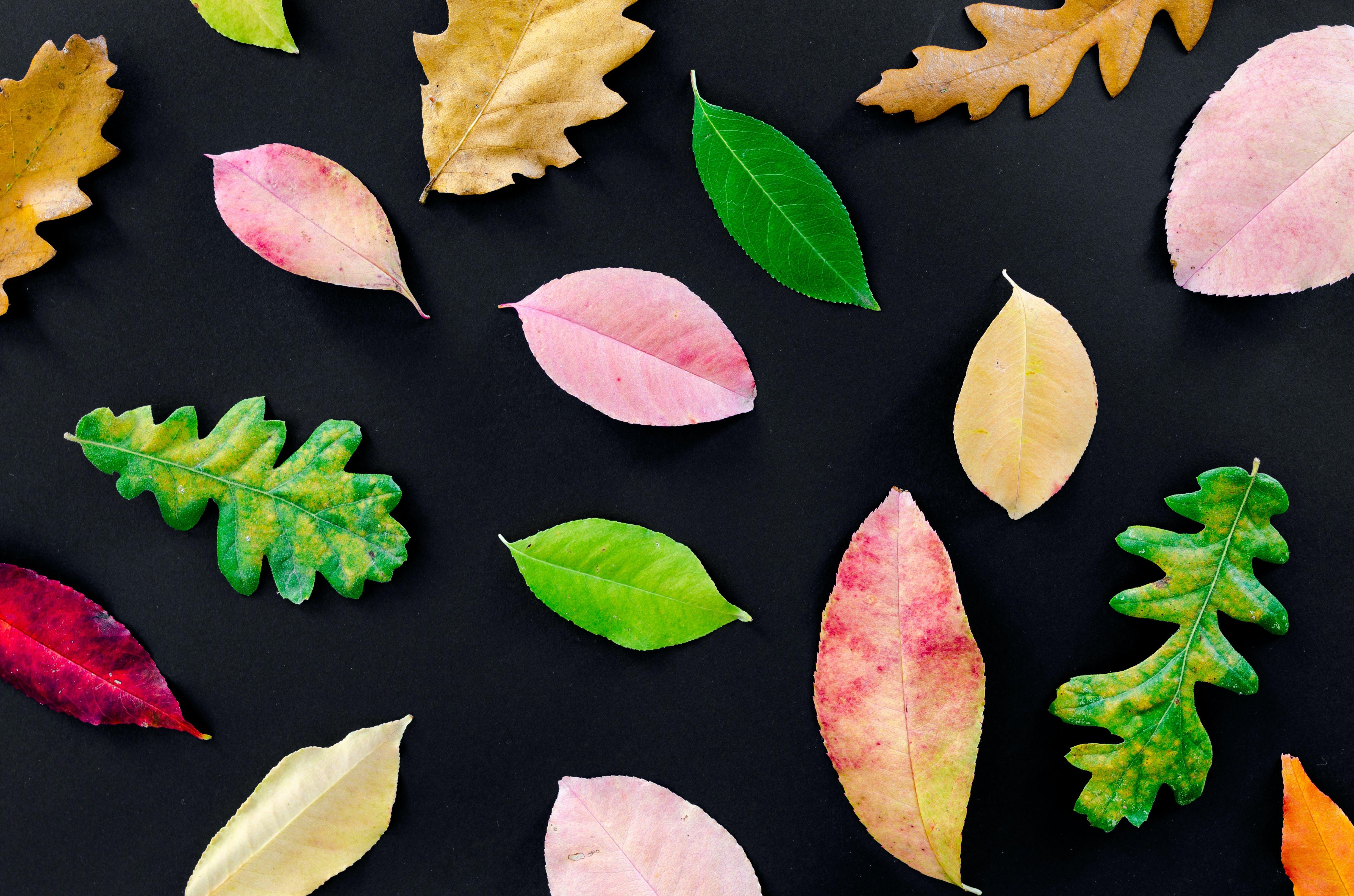 Assorted-color Leaves Illustration