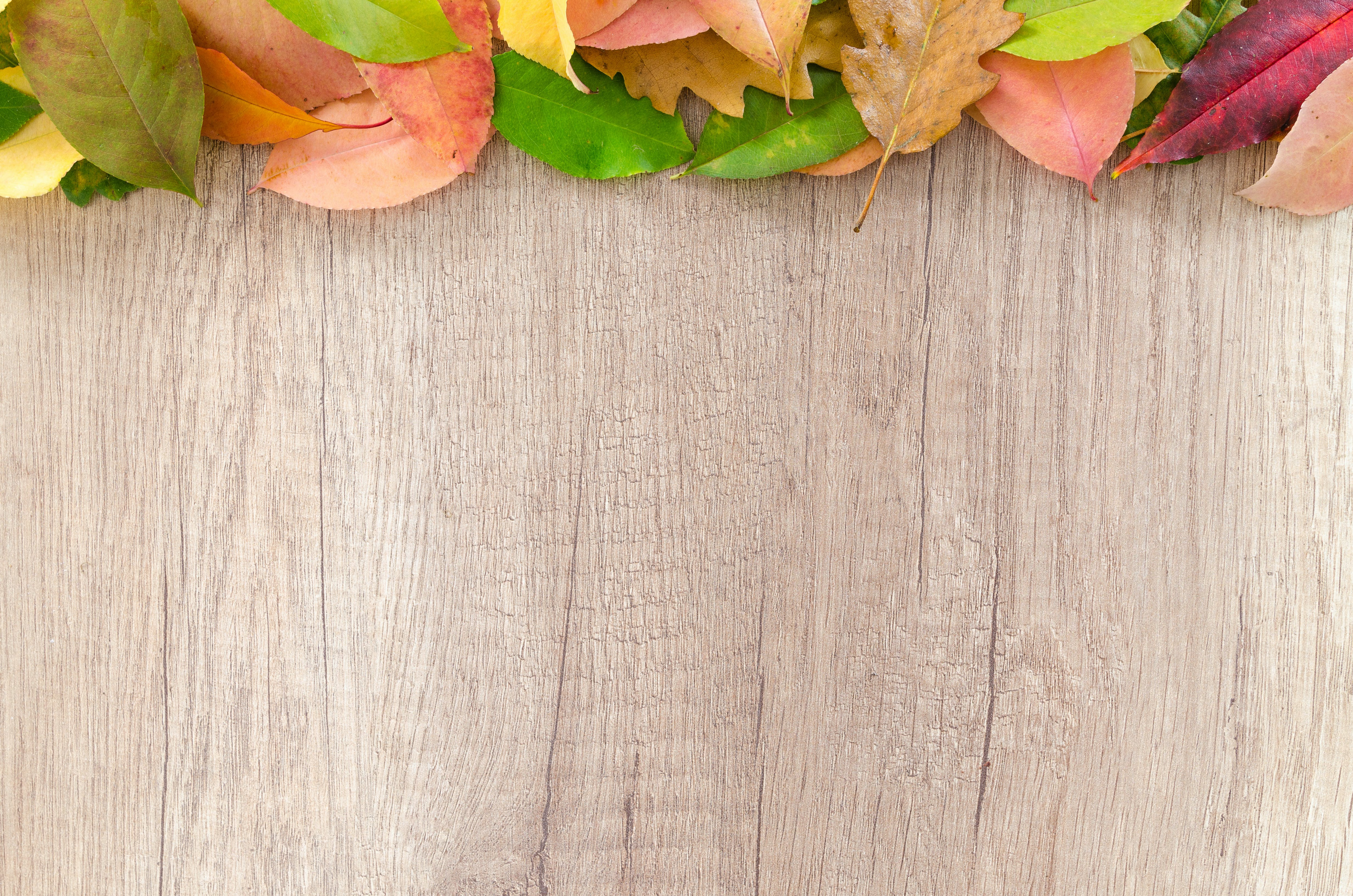 Assorted-color Leaves on Wooden Surface