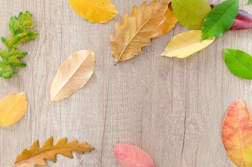 Безкоштовне стокове фото на тему «барвистий, вересень, День подяки, Деревина»