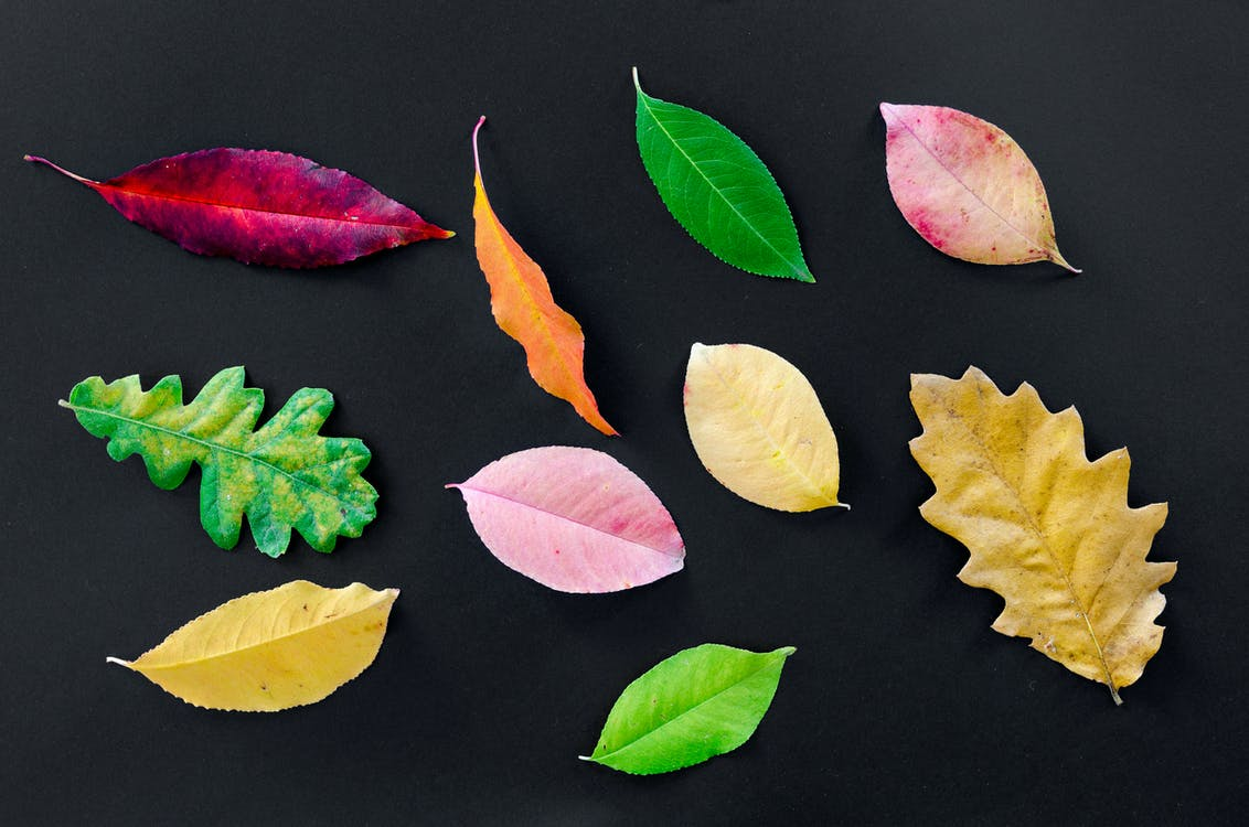 Assorted Types Of Leaves On Black Surface