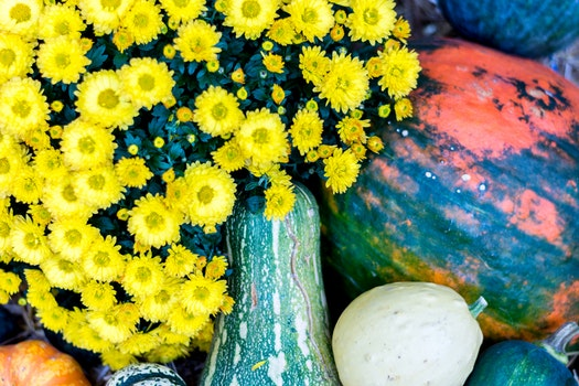 Free stock photo of vegetables, nature, flowers, petals