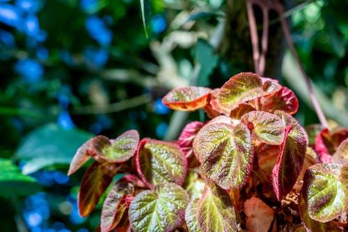 Foto stok gratis farben, farben des herbstes, herbst, herbstblatt