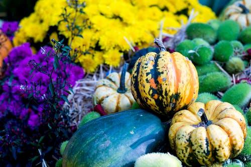 Foto stok gratis farben, farben des herbstes, herbst, herbstdekorasi