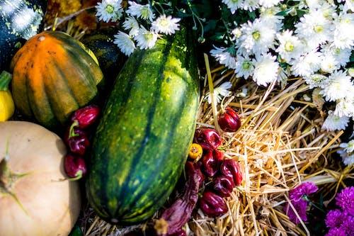 Foto stok gratis cabai, dekorasi, farben, farben des herbstes