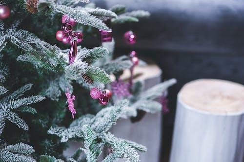 Imagine de stoc gratuită din acasă, anotimp, arbore, bile
