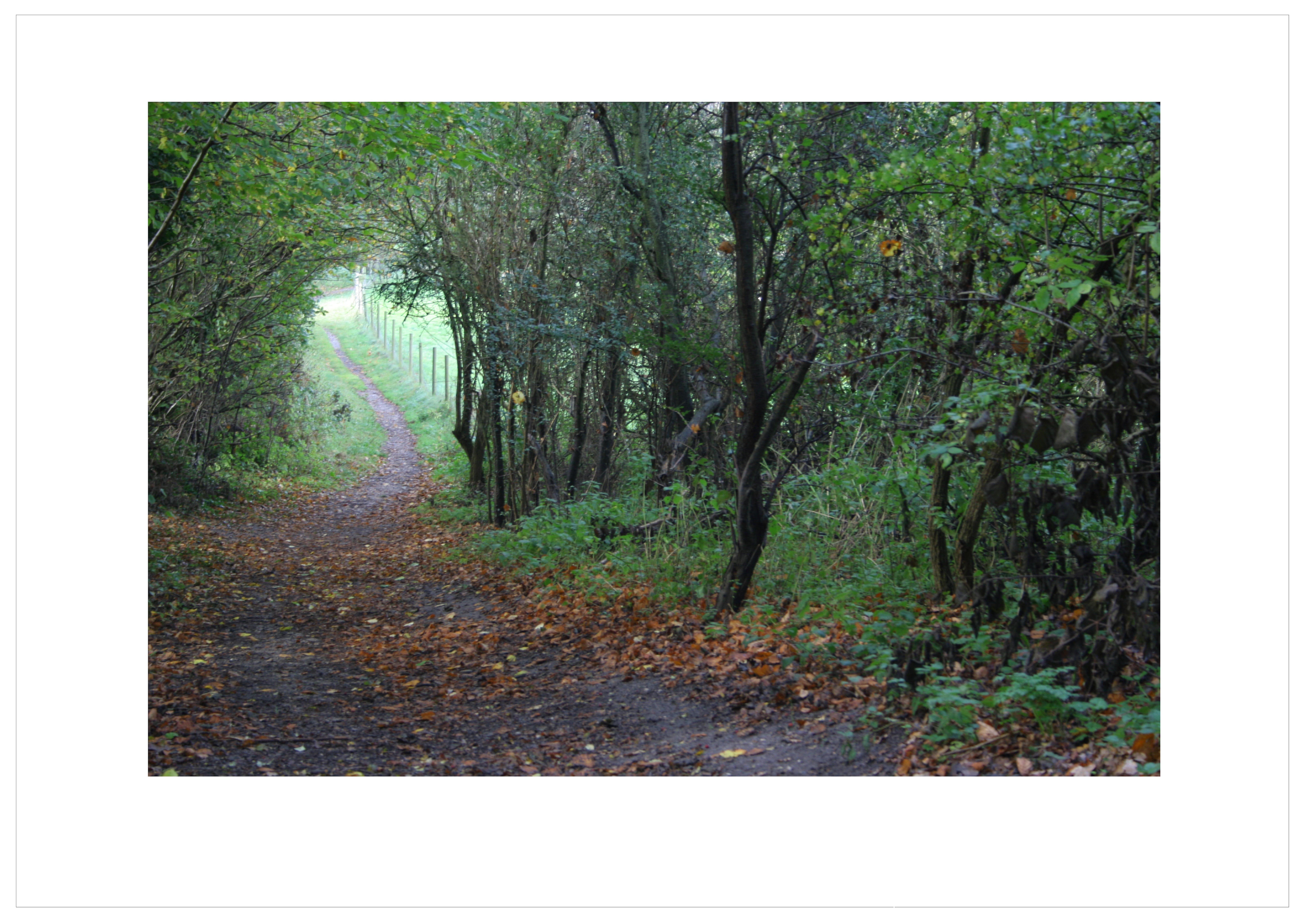 Základová fotografie zdarma na téma barvy podzimu, cesta, hloubka ostrosti, krajina