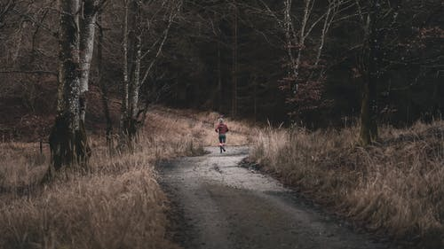 Back View of a Person Walking on a Trail