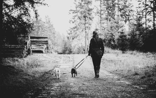 Person Walking Her Two Dogs