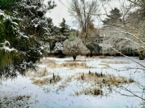 Ilmainen kuvapankkikuva tunnisteilla keskittyminen, lumi, pitkäaikainen, prespective