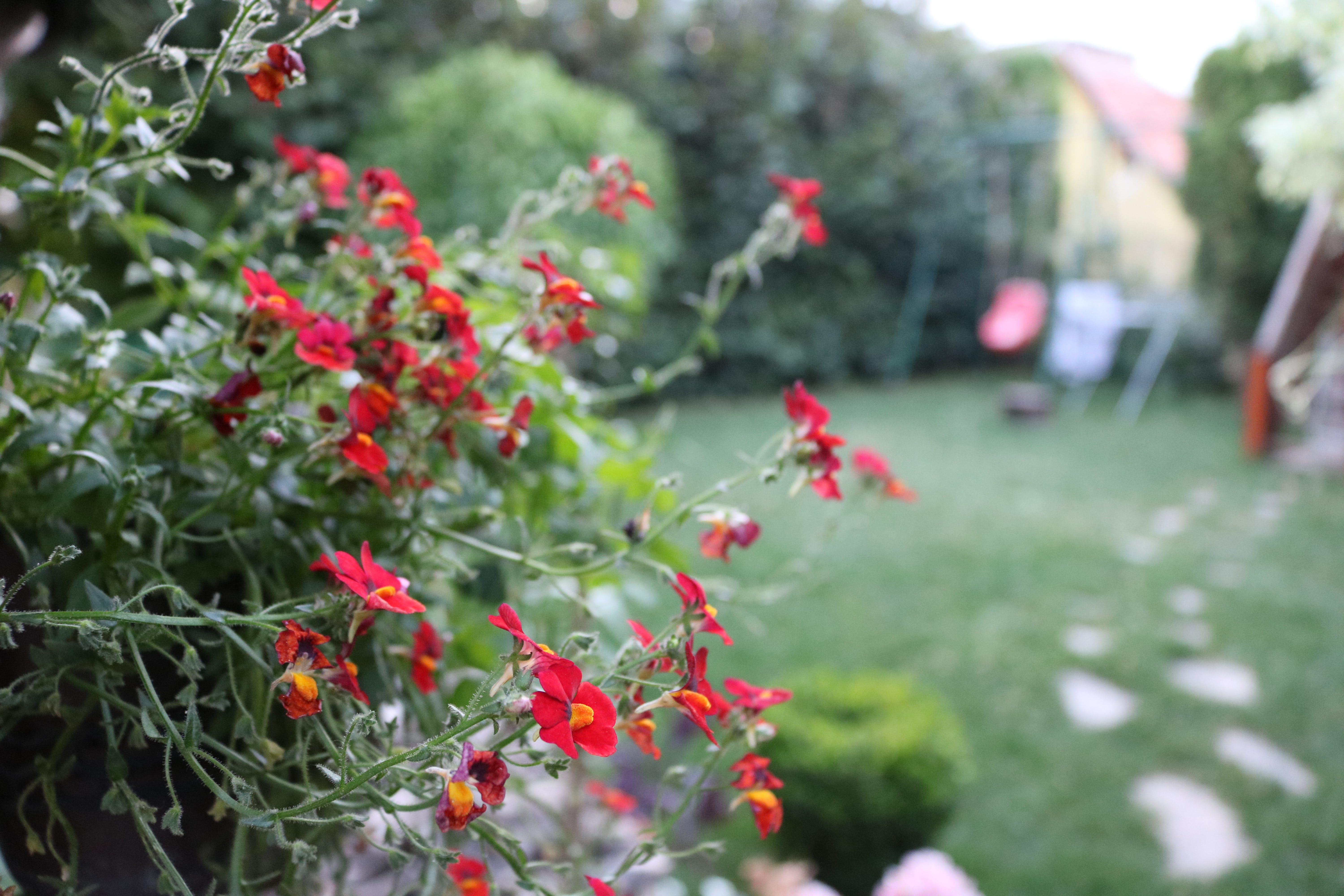 Red Flowers in Tilt Shift Photography