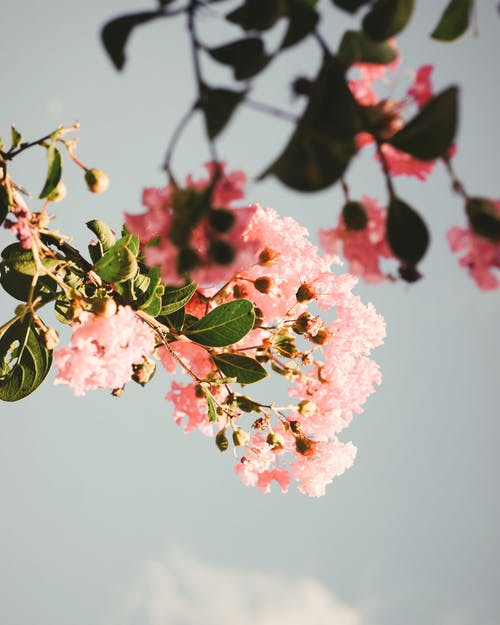 Low-Angle Shot of Blooming Pink Flowers