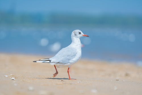 Selective Focus Photo of a White Gull