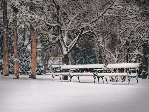 Free stock photo of austria, bench, benches