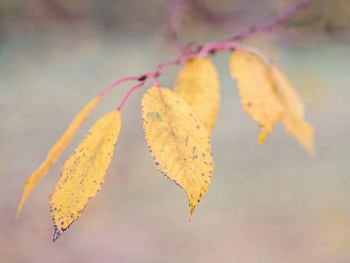 Free stock photo of colors of autumn, fall colors, silence