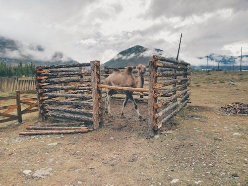 Foto d'estoc gratuïta de a pagès, animal, arbres, boscos