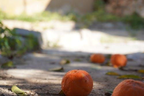 Free stock photo of orange fruit