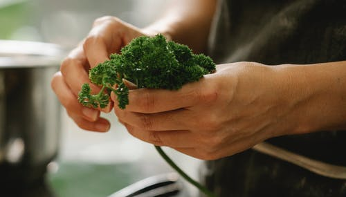 Crop unrecognizable female chef touching verdant green parsley while cooking in light kitchen