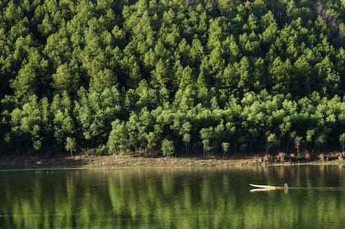 Immagine gratuita di acqua, alberi, ambiente
