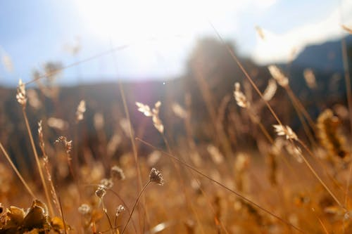 Foto stok gratis alam, alami, berbayang, berfokus