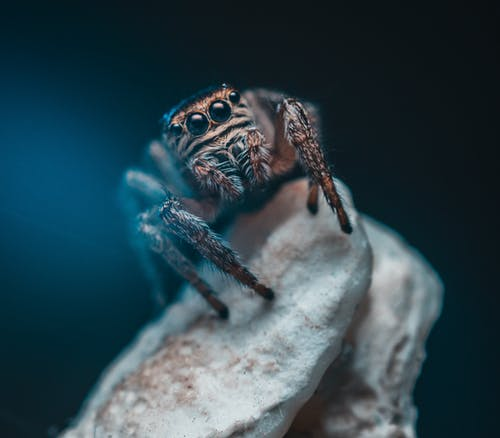 Brown Spider on Shallow Focus Lens