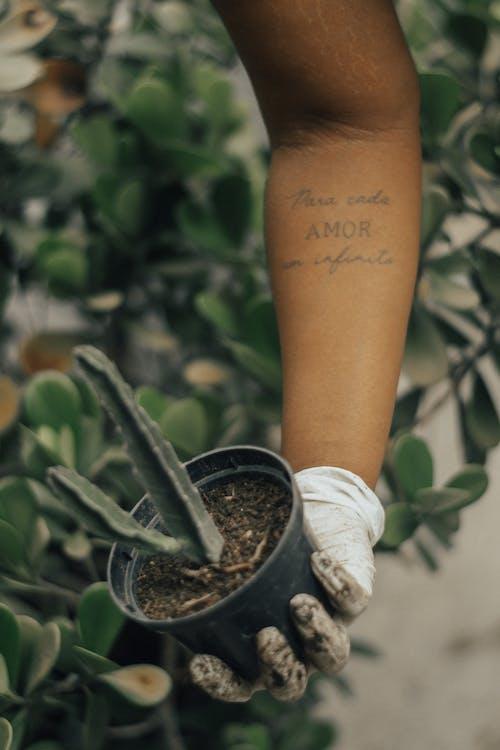 人, 仙人掌, 可持續性 的 免费素材图片