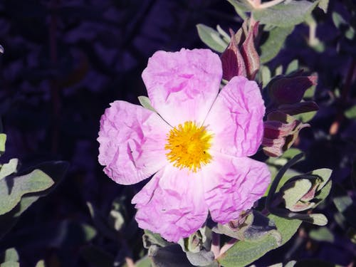 Free stock photo of beautiful flowers, flower, flowers, nature
