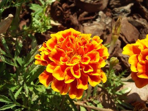 Free stock photo of flower, flower photography, flowers, macro