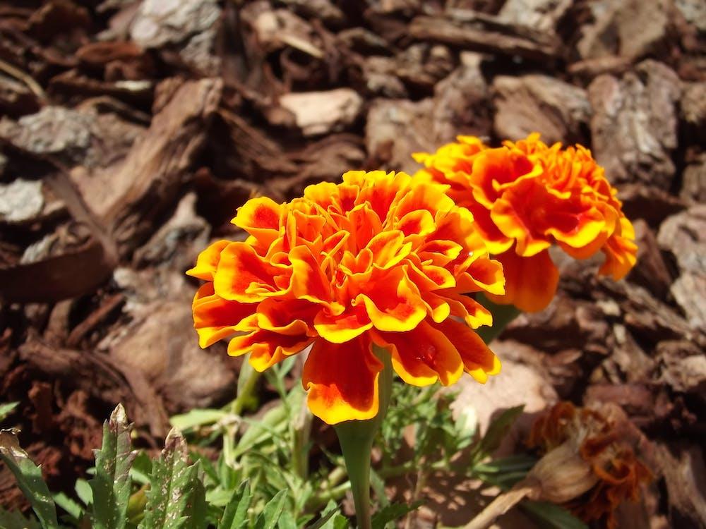 Free stock photo of flower, flowers, macro photo