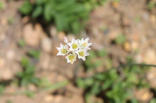 Free stock photo of flower, flowers, macro, macro photography