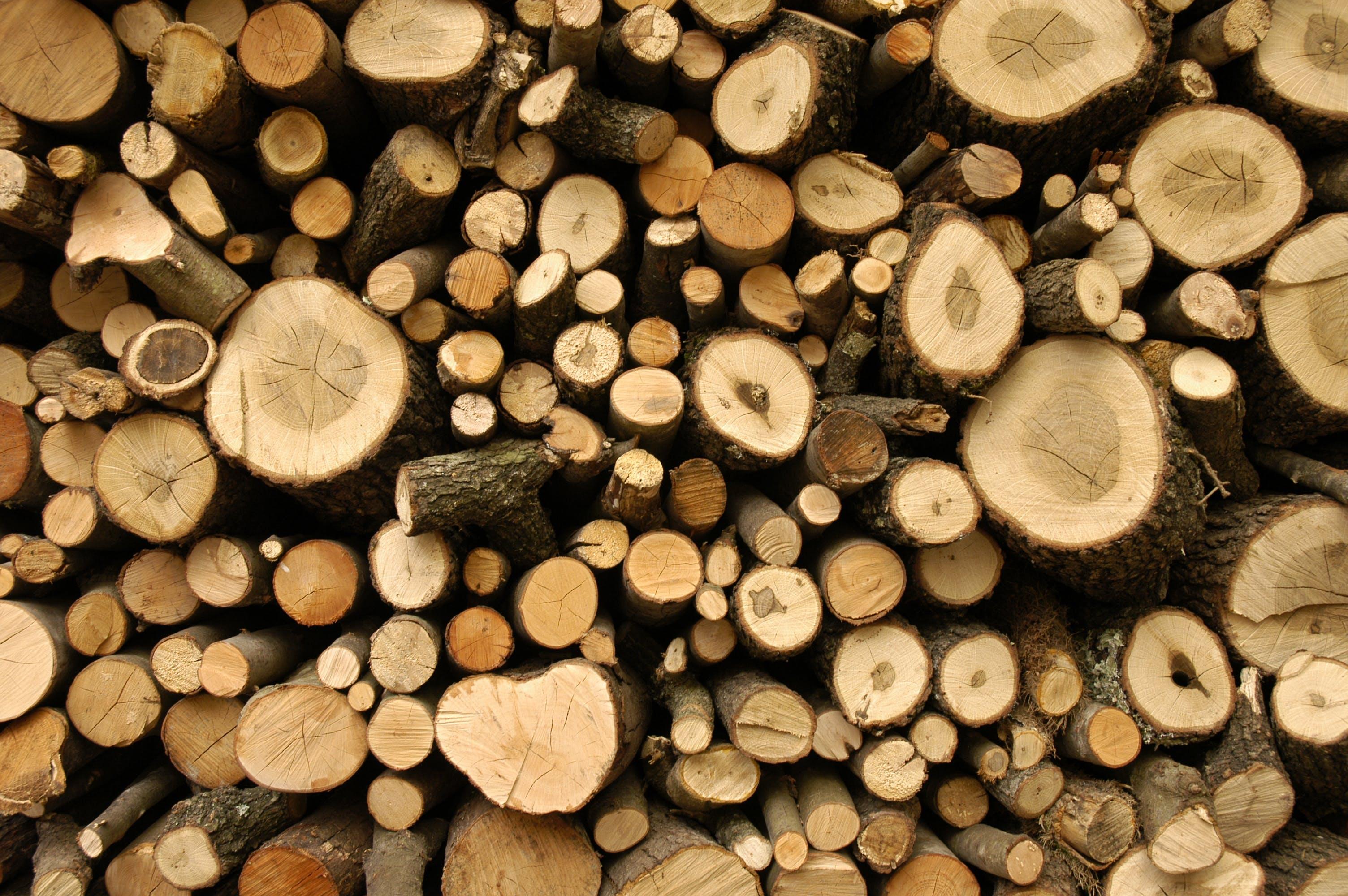 Kostenloses Stock Foto zu borke, brennholz, brennhölzer, draußen