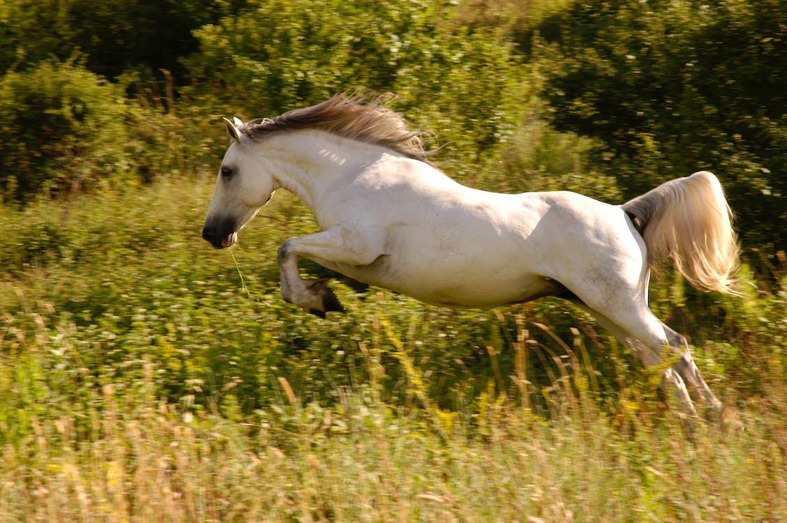 White Horse on Green Grass Field