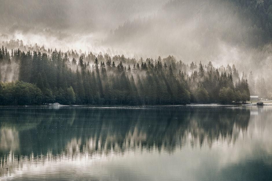 daylight, environment, fog