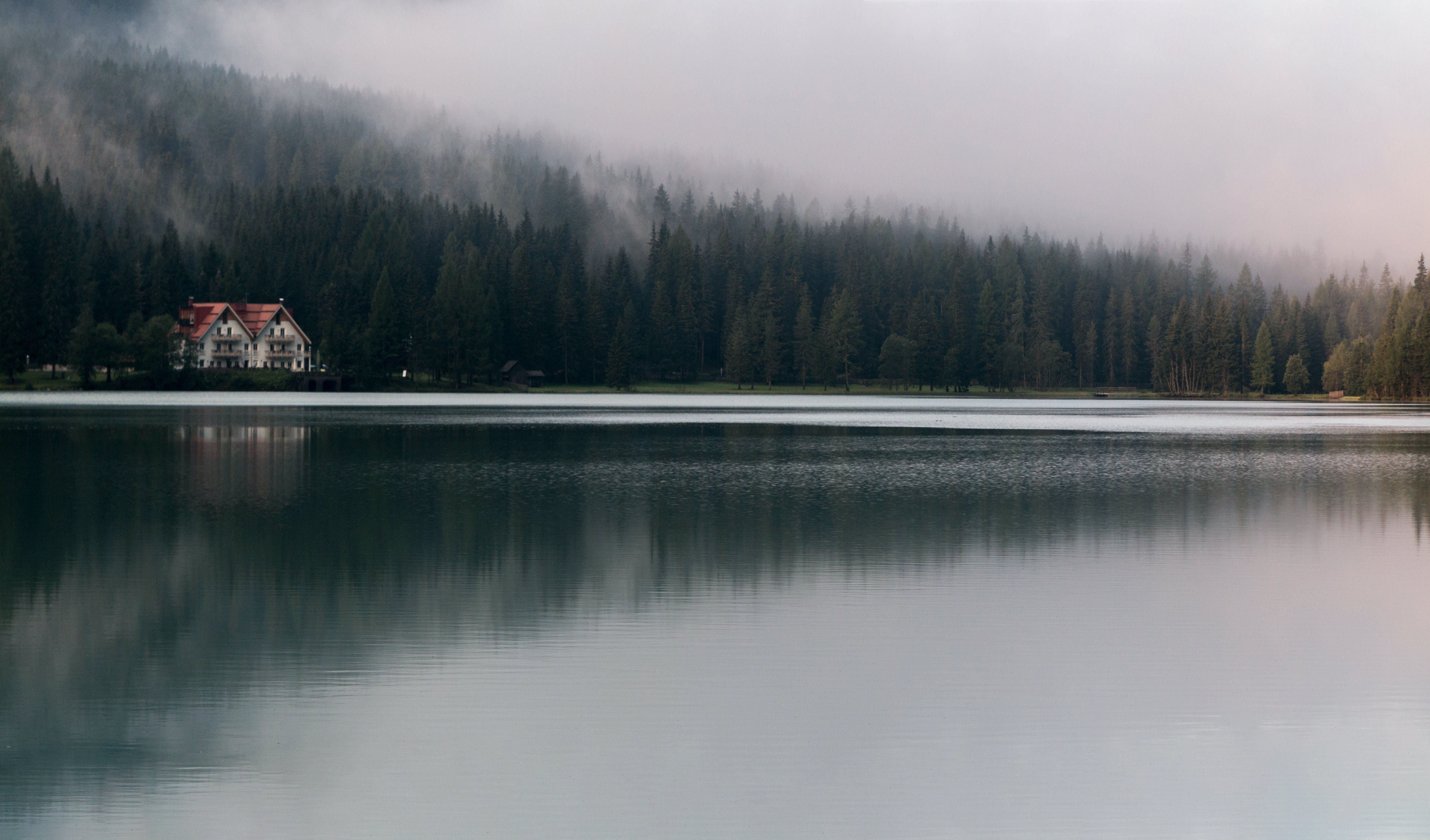calm waters, conifers, environment