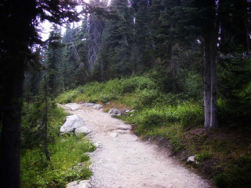 Free stock photo of footpath, forest, nature photography