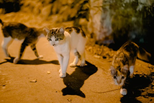 Adorable dappled cats walking and casting shadow on sidewalk near concrete block on street at night time on blurred background
