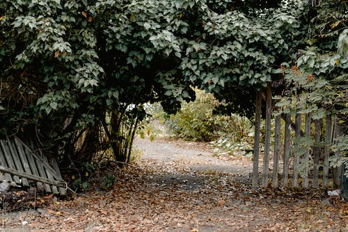 Gratis arkivbilde med blad, blomst, busk, falle