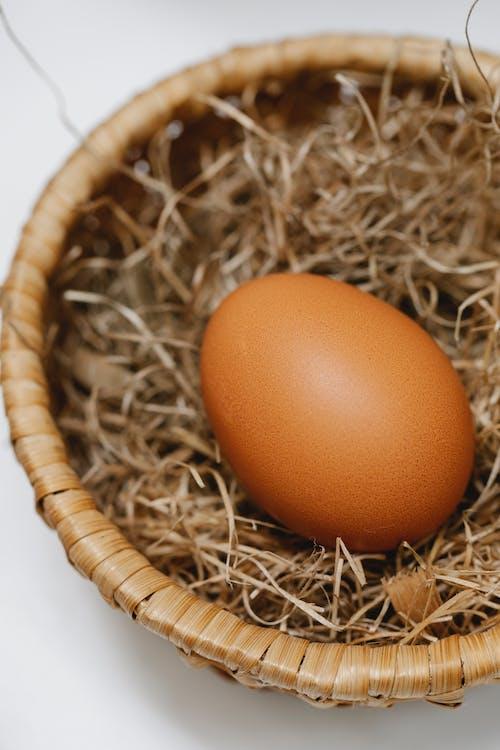 Huevo Marrón En Nido Marrón