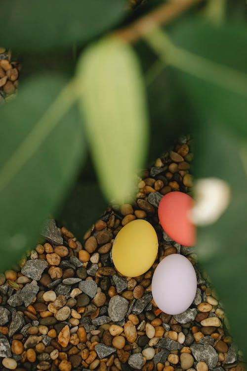 Colorful Easter eggs near green leaf