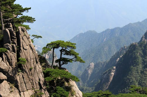 布朗岩山綠樹
