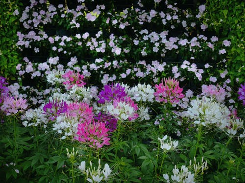 Free stock photo of beautiful, beauty, bloom