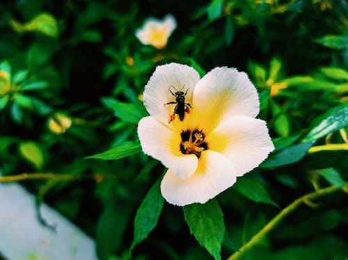Imagine de stoc gratuită din albină, creștere, delicat, dragoste
