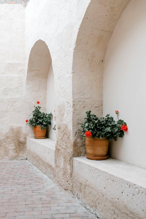 Pots with blooming red flowers on old stone wall in street in summer day