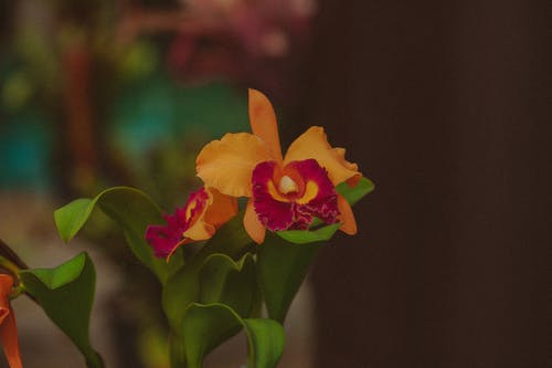 Bright blooming flowers with colorful thin petals of orchid and green leaves against blurred background