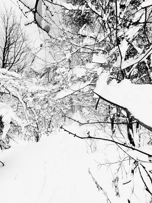 Free stock photo of white christmas, winter background