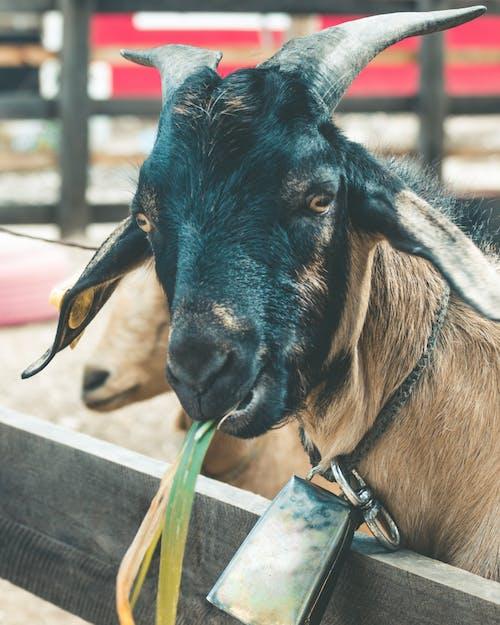 Free stock photo of animal, animals, beautiful