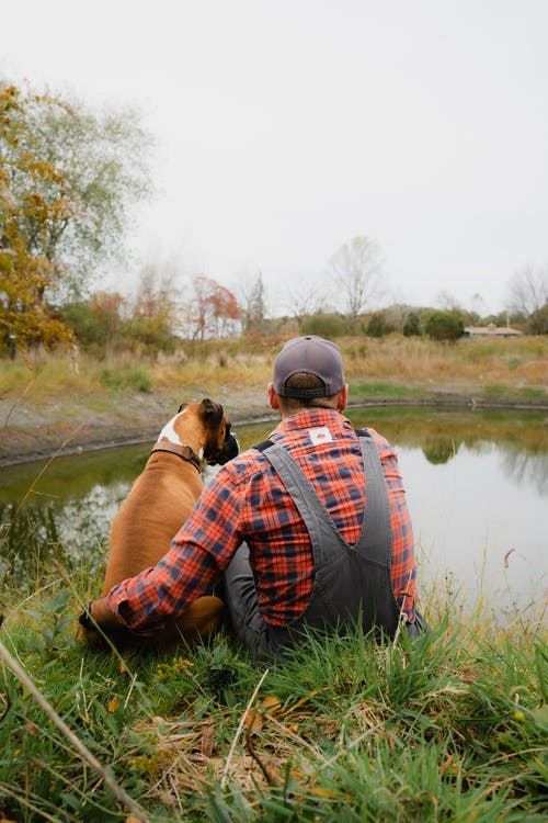 Back view anonymous male in casual clothes hugging Boxer dog while resting together on grassy peaceful pond coast in tranquil nature