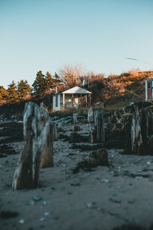 Dry cut tree logs on sandy shore near small wooden house located on hill slope covered with grass and fir trees against blue sky at sunset