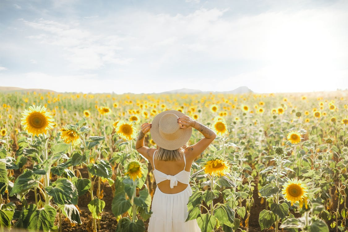Back View of a Woman in White Dress and Sun Hat Standing in the Middle of the Blooming Sunflower Field