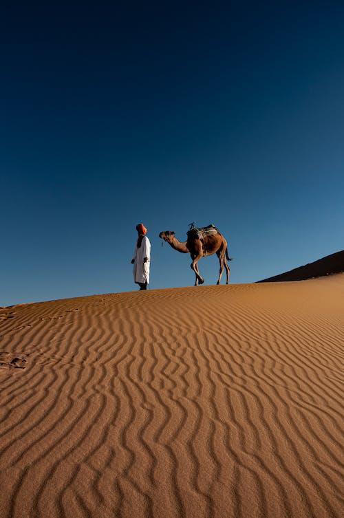 Foto profissional grátis de árido, camelo, céu limpo