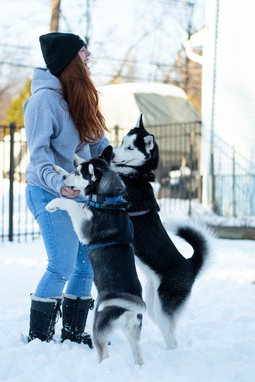 Playful Dogs with their Owner